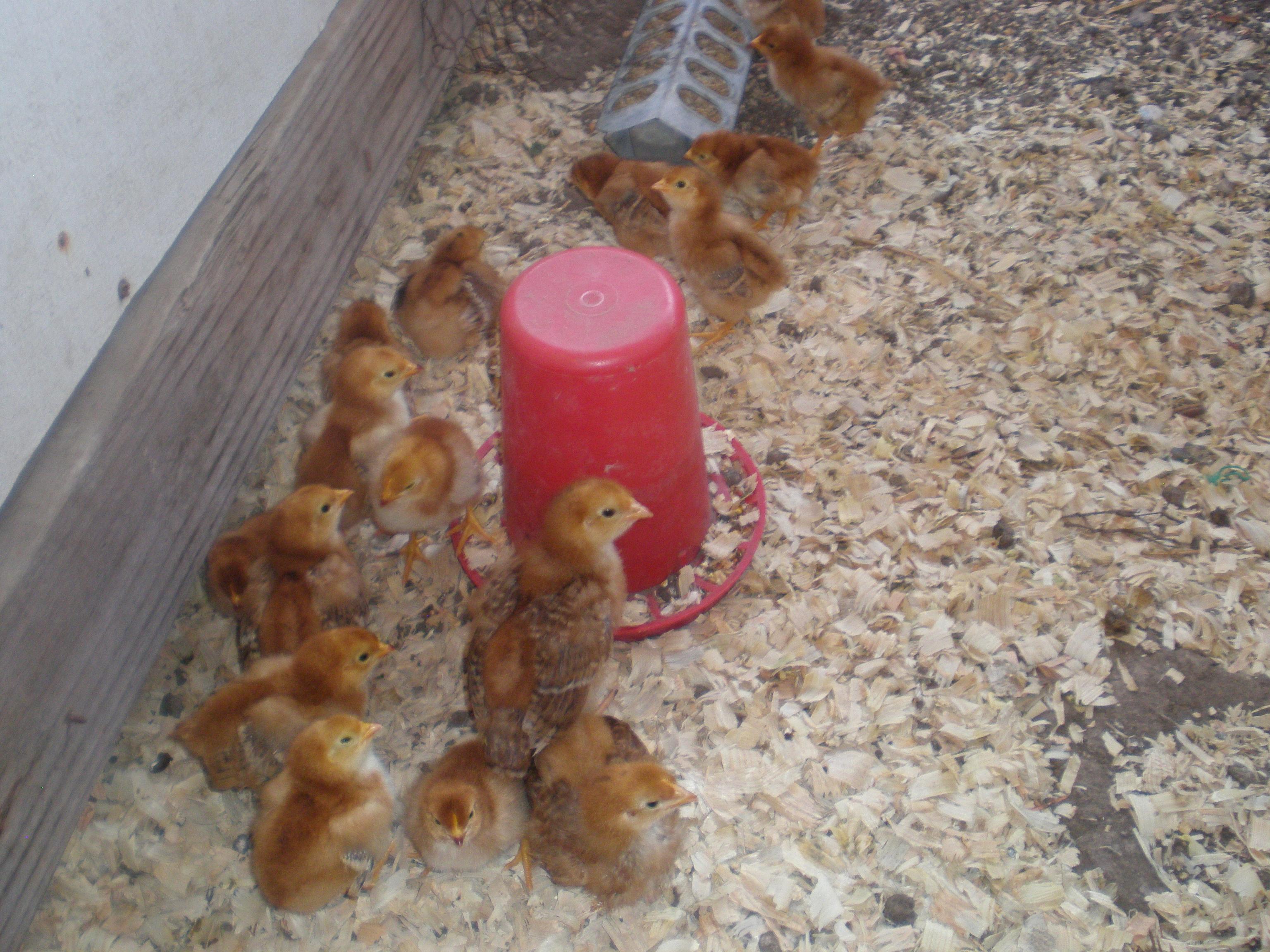 Electric Fence Farms Animal Micro Farms Farms Fence Shock Revelation
